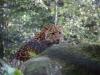 Leopardenbaby_0001