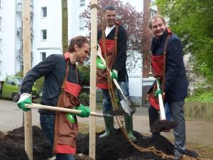 Albin Ekdal, Nabil Bahoui und Jens Kerstan pflanzen einen Baum