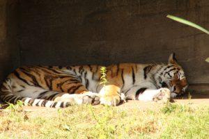 Yasha beim Mittagsschlaf