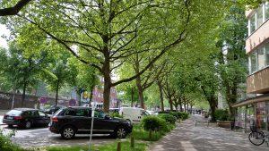 Straßenbäume im Schanzenviertel