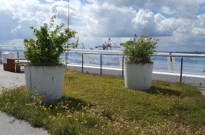 Dachgarten auf dem Unilever-Haus