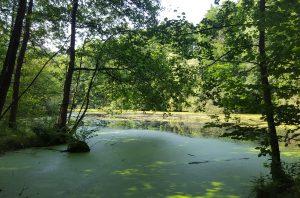 Naturschutzgebiet am Alsterwanderweg